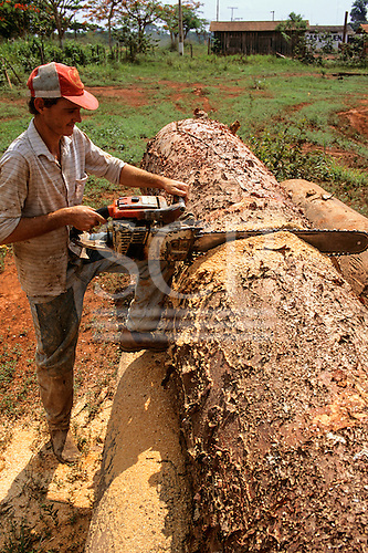 Mato Grosso State, Brazil. Man cutting tree trunks with a chainsaw at a sawmill.