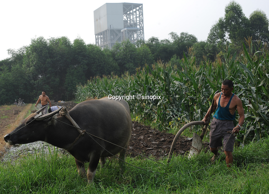 Farmers at Xiao Jiao village next to the Dong Qi Emei Polysilicon Project near Leshan, Sichuan, China, that have been damaged by gasses leaking from the plant. The villagers complain of contaminated vegetables and poisoned air and ground water from the plant.