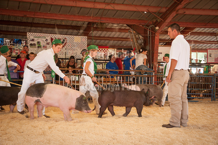 Opening parade and ribbon cutting at the 74th Amador County Fair, Plymouth, Calif...Novice Swine Showmanship class