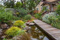 Backyard pond fed from rainwater harvested in cistern; Judy Adler Garden, Walnut Creek, California