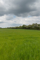 27-5-2021 Silage field ready for mowing in Northamptonshire <br /> ©Tim Scrivener Photographer 07850 303986<br />      ....Covering Agriculture In The UK....