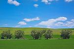Palouse Hills Landscape