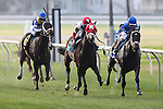 NEW ORLEANS, LA - JANUARY 21:<br />  Granny's Kitten #9 ridden by Miguel Mena during the Colonel E.R. Bradley Handicap at the Fairgrounds Race Course on January 21,2017  in New Orleans, Louisiana. (Photo by Steve Dalmado/Eclipse Sportswire/Getty Images)