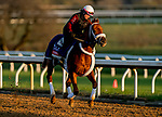 November 3, 2020: Vekoma, trained by trainer George Weaver, exercises in preparation for the Breeders' Cup Sprint at Keeneland Racetrack in Lexington, Kentucky on November 3, 2020. Scott Serio/Eclipse Sportswire/Breeders Cup