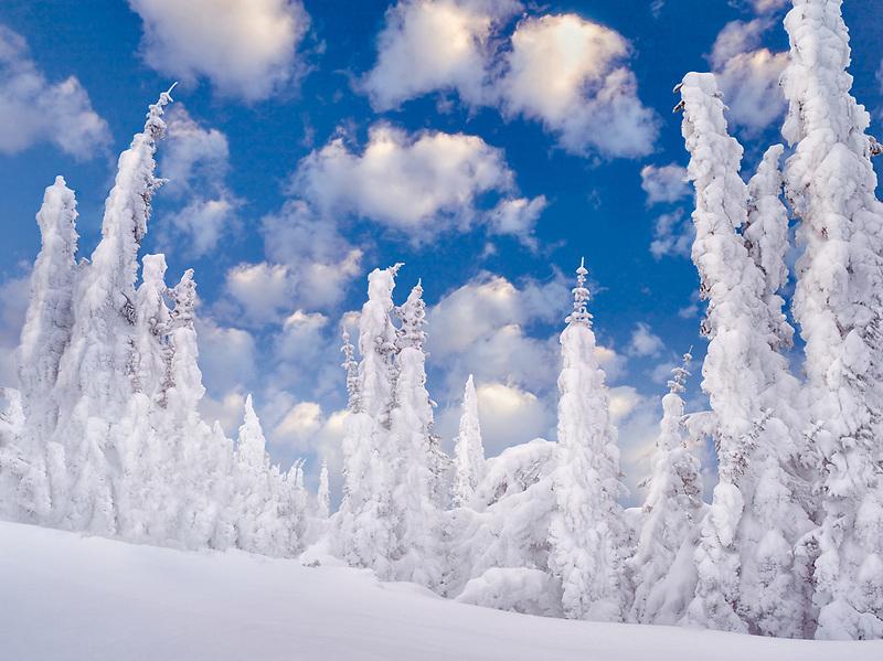 Heavy snow on trees. Mt. Rainier National Park, Washington
