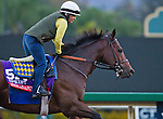 October 26, 2014:  Indianapolis, trained by Bob Baffert, exercises in preparation for the Breeders' Cup Xpressbet Sprint at Santa Anita Race Course in Arcadia, California on October 26, 2014. John Voorhees/ESW/CSM