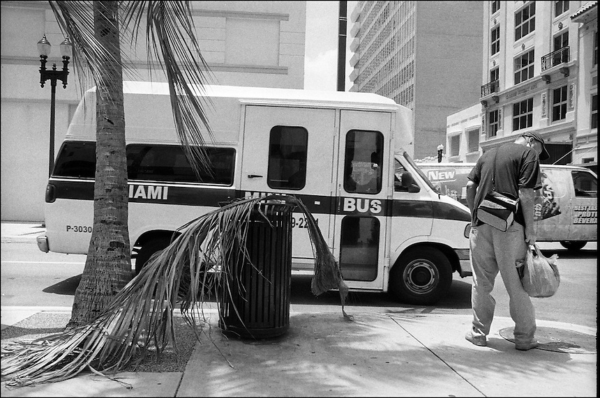 """Palm Leaf<br /> from """"Walking Downtown"""" series.<br /> Miami, Florida, 2010"""