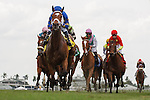 HALLANDALE BEACH, FL- APRIL 02: #4 Photo Call with Javier Castellano up wins the Orchid Stakes at Gulfstream Park on April 02, 2016 in Hallandale Beach, Florida. (Photo by Arron Haggart/Eclipse Sportswire/Getty Images)