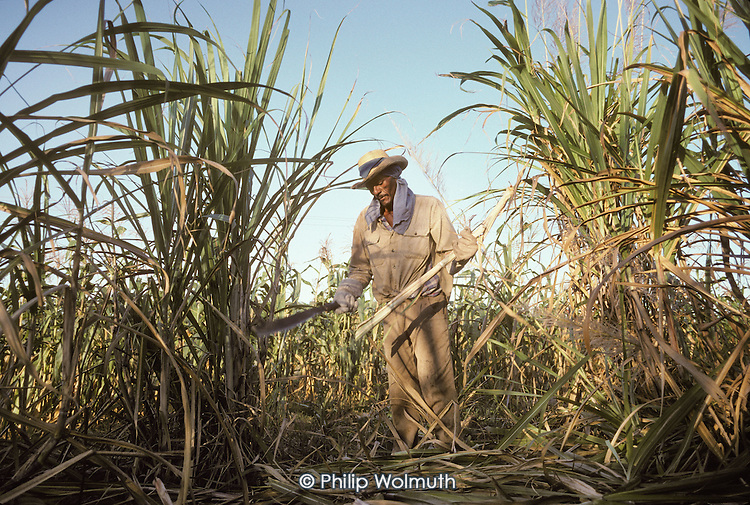 Cutting cane near Madruga in eastern Havana province. Sugar is still Cuba's main export crop and much of the harvest is done with machines.