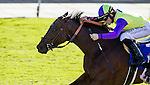 October 04 2014: Rhagori wins the Swingtime Stakes at Santa Anita Park in Arcadia CA. Alex Evers/ESW/CSM