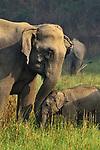 Elephant and calf bond by Tanay Panpalia
