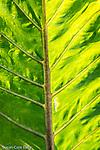 Bright foliage on the Rose Fitzgerald Kennedy Greenway,  Boston, Massachusetts, USA