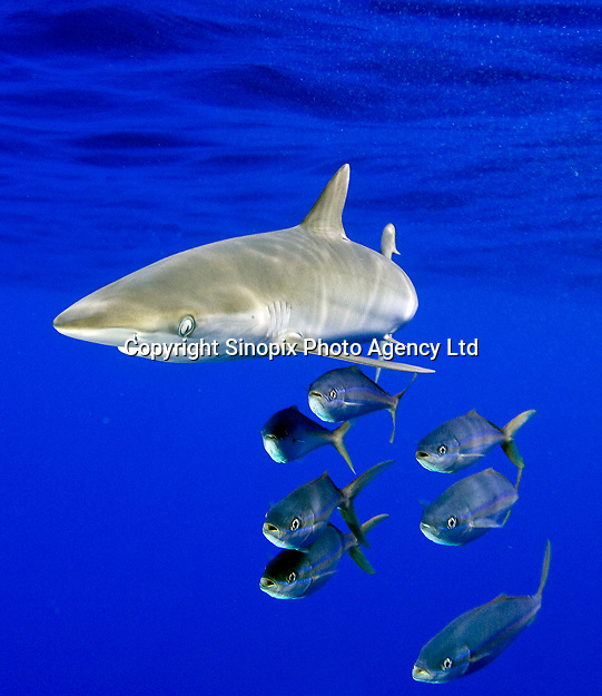 Portfolio of Sinopix photographer (photo1) in Hong Kong and south China. <br /> <br /> Photo by Sinopix