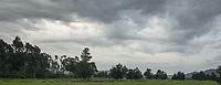 Cloud formations with old totara tree on farmland in Whataroa, South Westland, West Coast, New Zealand, NZ