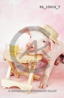 Interlitho, Alberto, ANIMALS, pigs, photos, pig, hat, bear(KL15018/7,#A#) Schweine, cerdos
