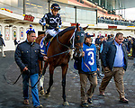 OZONE PARK, NY - NOVEMBER 26, 2016: Hookup #3 in the paddock for the Grade 2 Remsen Stakes for 2-year olds, at Aqueduct Racetrack . (Photo by Sue Kawczynski/Eclipse Sportswire/Getty Images)