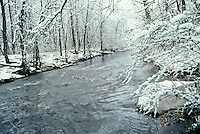 Creek full in late winter with snow buds