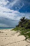Beach at Cayos Zapatillas, part of Bastimentos's National Marine Park, Bocas del Toro, Panama