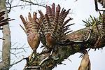 Epiphytes On Tree, Tiputini