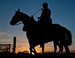 D. Wayne Lukas leads one of his Preakness entries off the track during morning workouts as horses prepare for the Preakness Stakes at Pimlico Race Course in Baltimore, Maryland on May 17, 2013.
