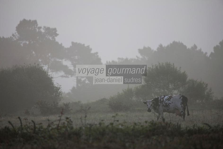 Europe/France/Bretagne/56/Morbihan/ Belle-Ile-en-Mer:  Brume matinale sur les paturages