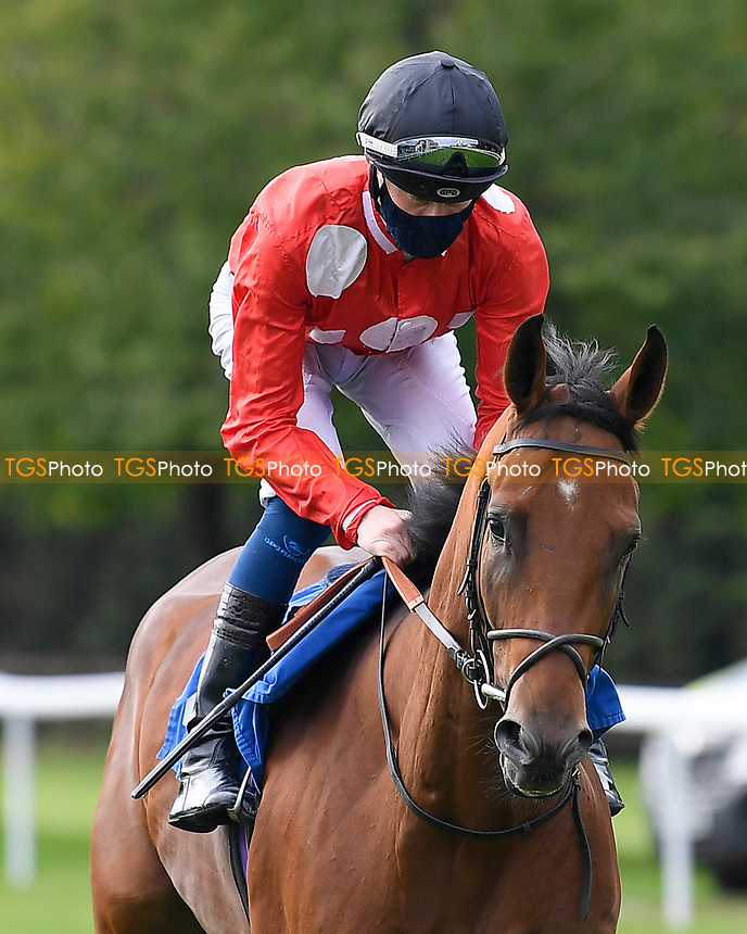 El Patron ridden by Daniel Muscutt goes down to the start of  The Draintech Tankers Nursery Stakes during Horse Racing at Salisbury Racecourse on 11th September 2020