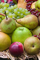 Harvested fruits and berries apples malus pears pyrus, gooseberries, currants, grapes, figs, in autumn fall