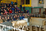 Fat Stock sale in the Tralee Mart on Monday