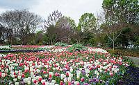Dallas Arboretum, March 2013