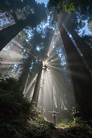 An angel in the Redwood forest of California.