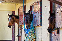 Pictured: General view of the stables. Wednesday 10 January 2018<br /> Re: Peter Bower Racing in Little Newcastle, west Wales, UK.