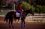 October 31, 2019: Breeders' Cup Distaff entrant Serengeti Empress, trained by Thomas M. Amoss, exercises in preparation for the Breeders' Cup World Championships at Santa Anita Park in Arcadia, California on October 31, 2019. Carlos Calo/Eclipse Sportswire/Breeders' Cup/CSM
