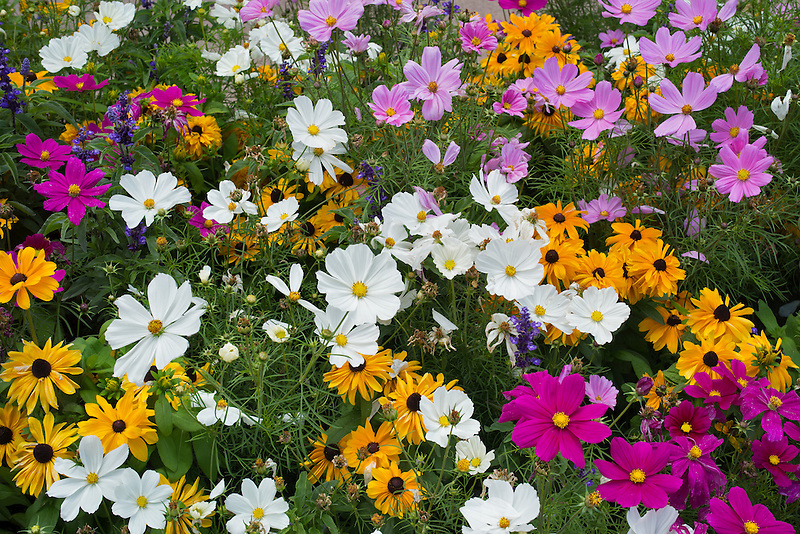 Close up of mixed flowers. Vail Village. Vail, Colorado