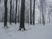 FOREST_LOCATION_90170