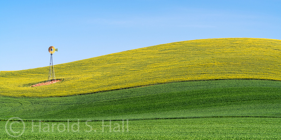 The Palouse is a fertile farming region in southeast Washington and parts of western Idaho.  The gentle rolling hills change from verdant green to brown as the seasons change.  Where Mustard is grown, the hills will be a brilliant yellow.