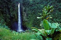 Akaka Falls, located along the Hamakua Coast