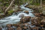Jordan Stream in Acadia National Park, Maine, USA