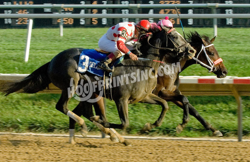 Vegas No Show winning The Dover Stakes at Delaware Park on 10/6/12