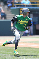 Tyler Baumgartner #13 of the Oregon Ducks runs to first base during a game against the UCLA Bruins at Jackie Robinson Stadium on May 18, 2014 in Los Angeles, California. Oregon defeated UCLA, 5-4. (Larry Goren/Four Seam Images)