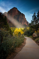 Path in Zion National Park, Utah