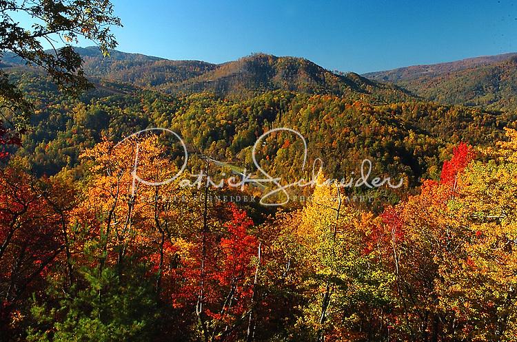 Autumn leaves color the North Carolina mountains near Banner Elk (Elk Park, NC).