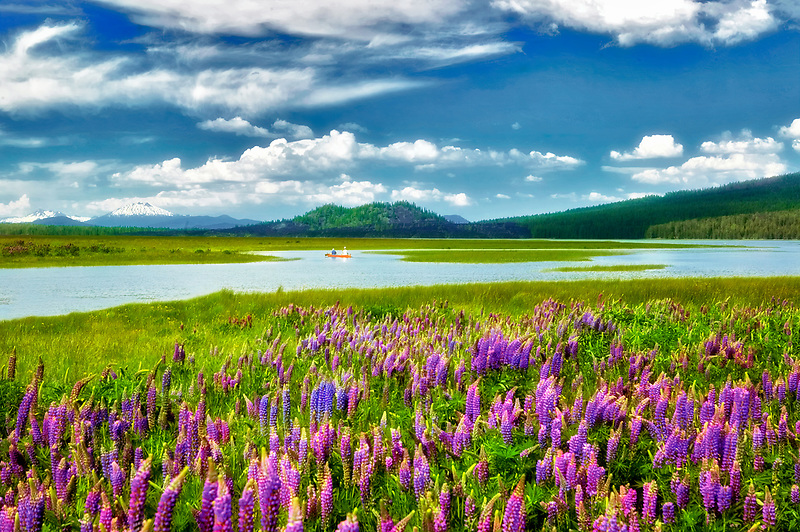 Canoe and lupines and Cascade mountains on Century Drive: Middle/South Sister,Broken top, and Mt. Bachelor, at Davis Lake, Oregon