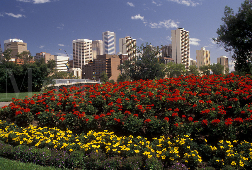 AJ3620, Calgary, skyline, Alberta, Canada, Red and yellow flowers adorn a city park with the skyline of Calgary in the distance in the province of Alberta.