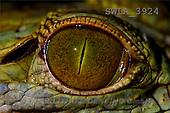 Carl, ANIMALS, wildlife, photos(SWLA3924,#A#)