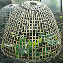 Bamboo cloche over young courgette plants, early June.
