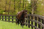 HORSE IN PENNSYLVANIA AT SPRINGDALE FARM