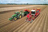 Harvesting potatoes - Lincolnshire, August