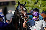 November 7, 2020 :A horse prepares for the Sprint on Breeders' Cup Championship Saturday at Keeneland Race Course in Lexington, Kentucky on November 7, 2020. Carolyn Simancik/Breeders' Cup/Eclipse Sportswire/CSM