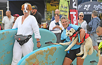 BNPS.co.uk (01202 558833)<br /> Pic: ZacharyCulpin/BNPS<br /> <br /> Pictured: Competitors at the start line<br /> <br /> <br /> Putting their best paw forward hoping to ride the wave of success - Competitors and their dogs take part in the annual Dog Surfing championships. <br /> <br /> The event known as The 'dogmasters' took place today on Bournemouth beach in front of packed crowd, it's the country's only dog surfing and paddleboard championship.