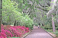 Azalea flowering women walking in oak trees at Alfred Maclay Gardens State Park Tallahassee Florida